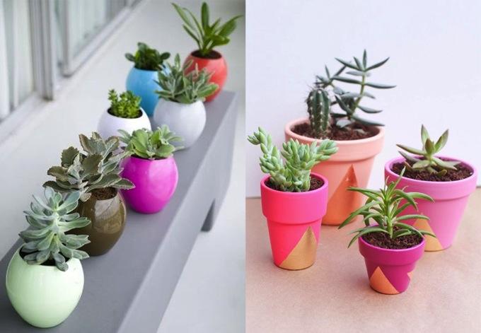 Diy inspiration plants pots Colorful pots for indoor plants