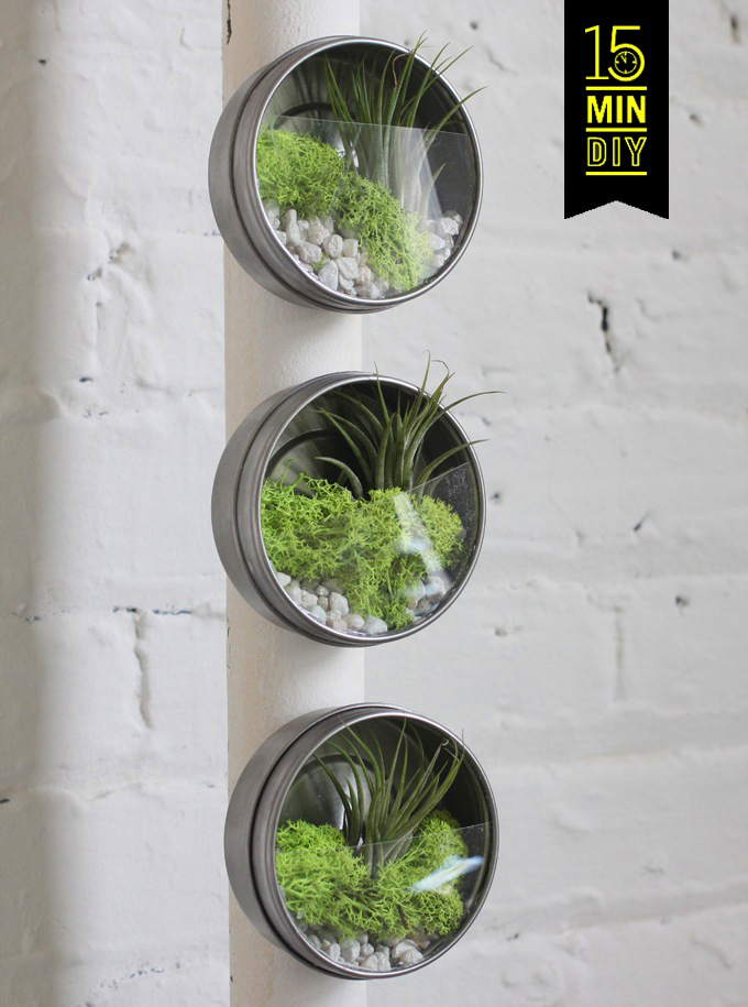 15 min diy mini air plant terrariums i spy diy bloglovin. Black Bedroom Furniture Sets. Home Design Ideas