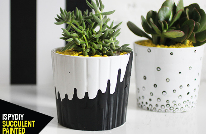 MY DIY | Painted Succulent Pot