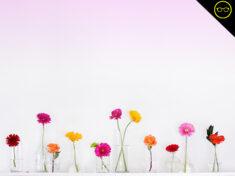 ispydiy_flowers
