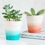 MY DIY   Dip Dye Succulent Pot