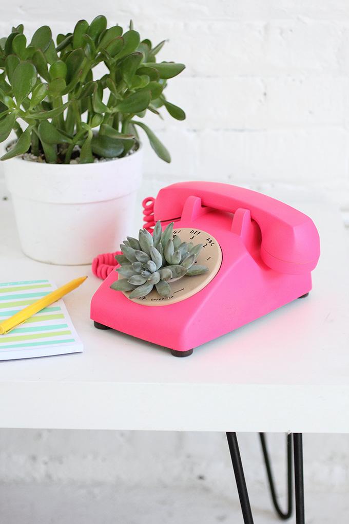 ispydiy_succulentphone1