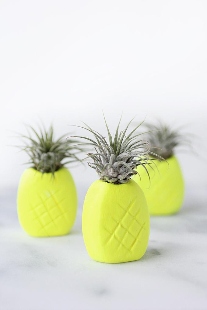 ispydiy_pineappleairplantholder1