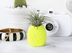 ispydiy_pineappleairplantholder_slider