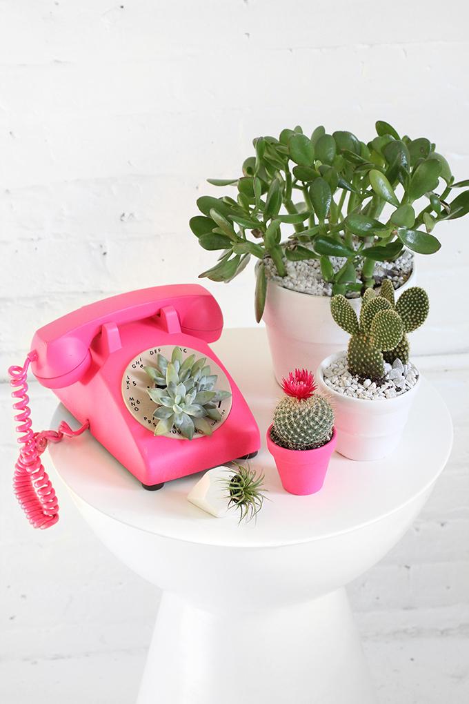 ispydiy_plantscare10