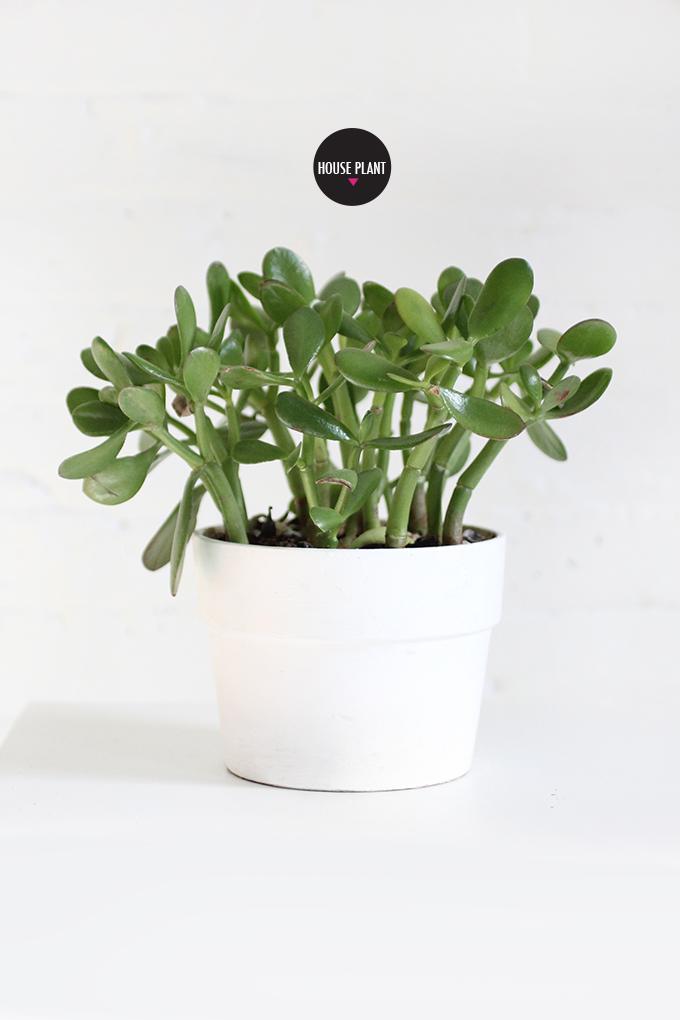 ispydiy_plantscare2