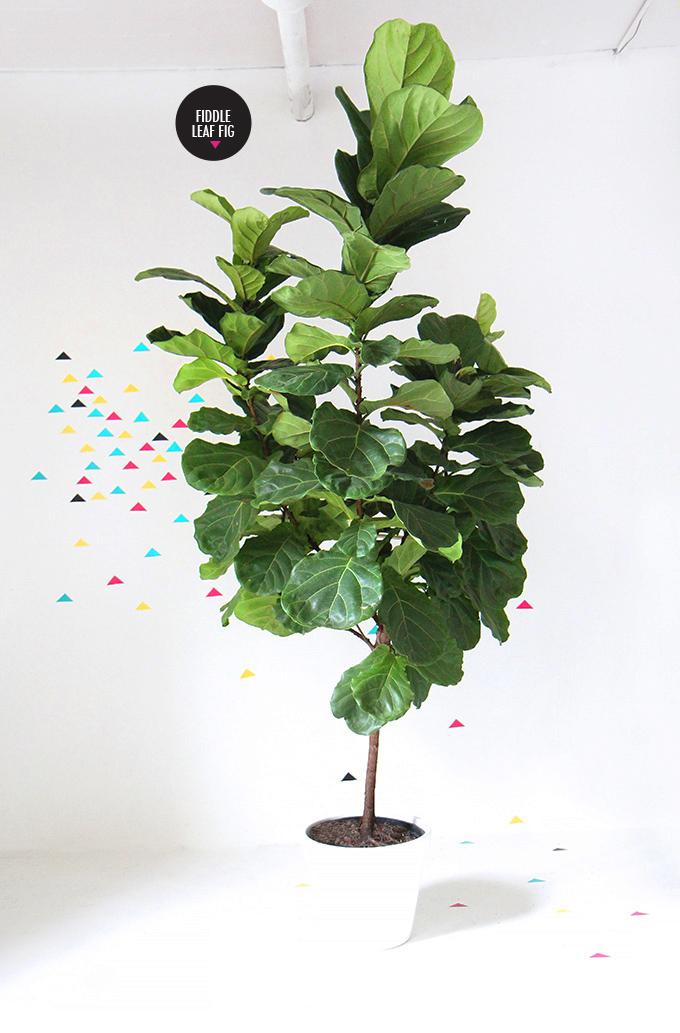 ispydiy_plantscare9