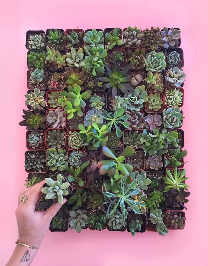 ispydiy_succulents2