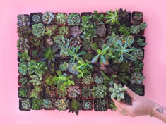 ispydiy_succulents2_slider