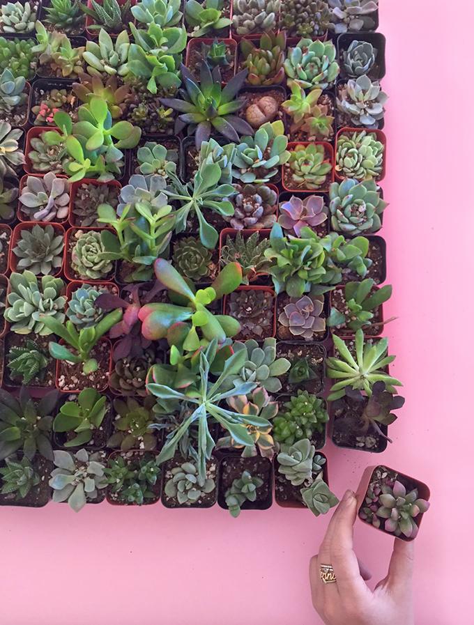 ispydiy_succulents3