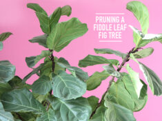 ispydiy_fiddlefig_slider