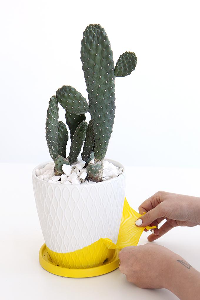 ispydiy_succulentgarden6
