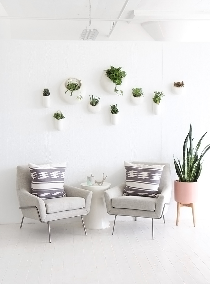 ispydiy_wallplants