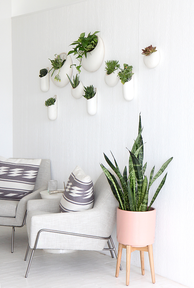 ispydiy_wallplants2