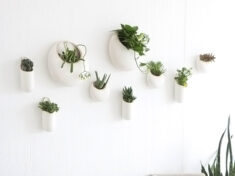 ispydiy_wallplants_slider